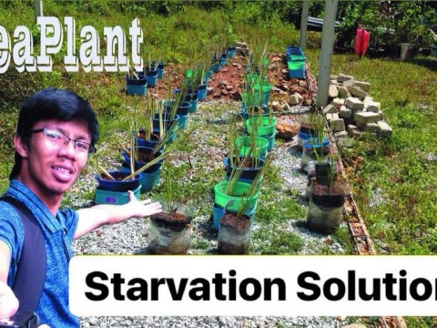 Let's Support our Student's Project - Seaplant