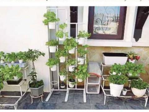 Kaedah tanaman hidroponik mudah,selamat